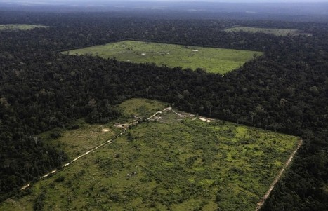 Tropical forests may be vanishing even faster than previously thought | Timberland Investment | Scoop.it