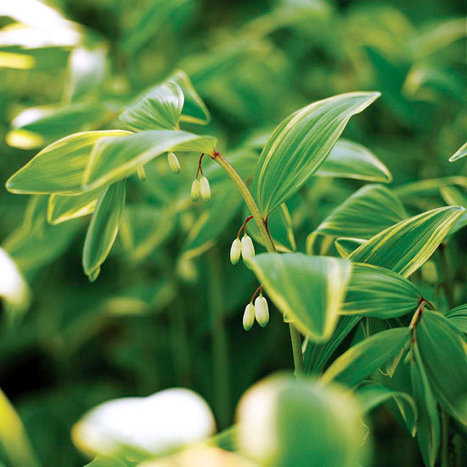 The Best Perennials for Your Yard | Landscape Creative Inspiration | Scoop.it