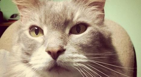 Un chat a-t-il déjà tué un être humain?  | Slate | Blonde Sans Filtre, c'est tout moi | Scoop.it