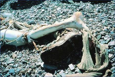 Preservation: When bodies don't decompose | Anthropology, Archaeology, and History | Scoop.it