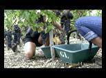Vitabella web TV : Vitabella.tv | Vitabella Wine Daily Gossip | Scoop.it