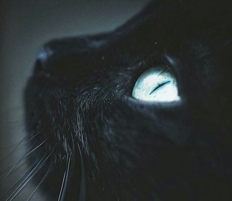 We Finally Know How the 'Mind-Altering' Cat Parasite Controls Our Immune Response | Medicine and Psychiatry | Scoop.it