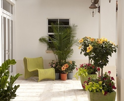 Outdoor Decorating Made Easy with Costa Farms Tropic Escape Collection of Plants | Garden Media Group | Scoop.it