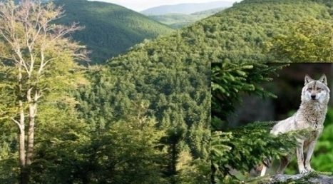 European Parliament: Help to protect the last virgin forests in Europe | Offset your carbon footprint | Scoop.it