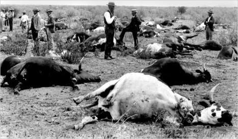 La peste bovine a-t-elle vraiment disparu ? | C@fé des Sciences | Scoop.it