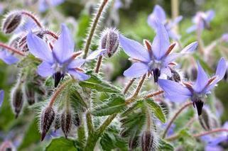 5 Fleurs Utiles au Potager   Le Blog du Jardinier Bio   Potager & Jardin   Scoop.it
