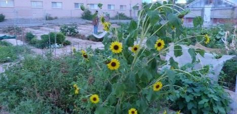 UA-Neighborhood Partnership Makes a Garden Grow | PressReleasePoint | CALS in the News | Scoop.it