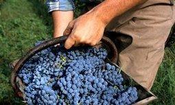 Wine: break for the Bordeaux   Planet Bordeaux - The Heart & Soul of Bordeaux   Scoop.it