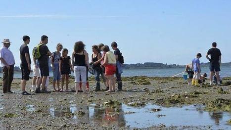 L'huître du Golfe se cultive et elle nous cultive - Ouest-France | Week-end romantique en Bretagne Sud Morbihan | Scoop.it