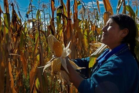5 cultivos que no resistirán los efectos del cambio climático | Agroindustria Sostenible | Scoop.it
