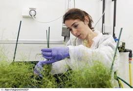 biologiste en environnement | mes_metiers | Scoop.it