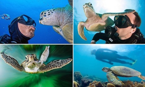 They've really come out of their shells! Scuba diver's stunning pictures as he ... - Daily Mail | Scuba News | Scoop.it