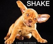 Shake: Dogs Caught Shaking by Carli Davidson | Laws for Paws | Scoop.it