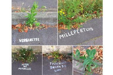 A Nantes, une mystérieuse graffeuse nomme les plantes des rues | biodiversité en milieu urbain | Scoop.it