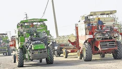 India: It's Haryana versus Punjab in wheat-harvesting season | WHEAT | Scoop.it