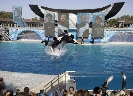 SeaWorld admits workers spied on animal-rights activists | Ethics? Rules? Cheating? | Scoop.it