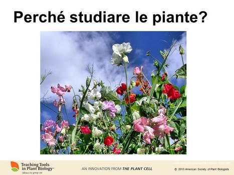 Perché studiare le piante? ¿Por qué estudiar las plantas? (Why study plants, in Italiano + Espanol) | Botany teaching & cetera | Scoop.it