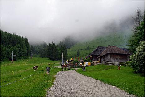 Visite à une fromagerie d'alpage - fabrication artisanale du gruyère ... | TRADOPTIMUM | Scoop.it