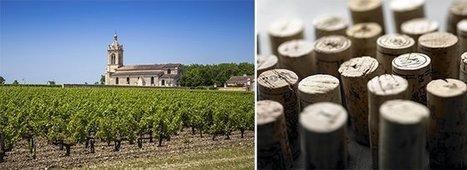 Primeurs de Bordeaux: bientôt le verdict sur le millésime 2014 | Autour du vin | Scoop.it