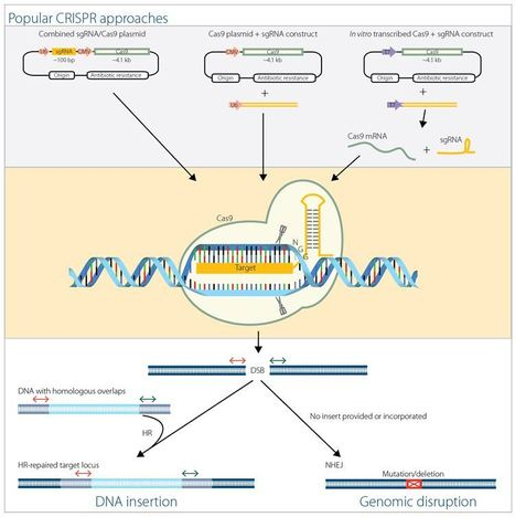 CRISPR and Cas9 for Flexible Genome Editing | DNA editing | Scoop.it