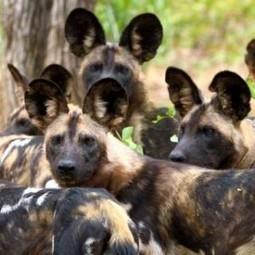 Wild Dog Safaris | Wildlife cruises | Scoop.it