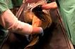 Rare Footage Of Eels Out Of Water | Marine Biology | Scoop.it