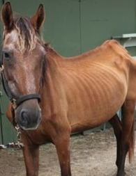 Animals On the Borderline: The Horse Slaughter Controversy | Psychology Today | Psychology and Brain News | Scoop.it