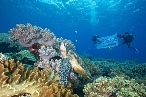 An urgent wake up call to protect our oceans - eco-business.com | Helping Wildlife Conservation Through Art | Scoop.it
