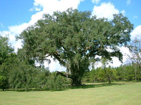 Dog found hanged from oak tree in Florida | The Billy Pulpit | Scoop.it