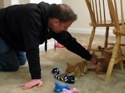 First Night Home with our New Shiba Inu Puppies   How can I do....?   Scoop.it