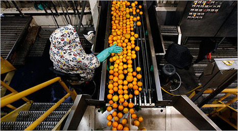 PepsiCo Figures Tropicana's Carbon Footprint - NYTimes.com | Walkerteach Geo | Scoop.it