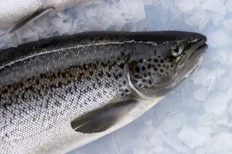 Disease found in salmon on one fish farm in B.C. but more research needed: study   Aquaculture Directory   Aquaculture Directory   Scoop.it