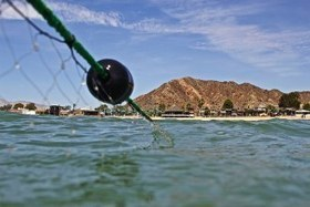 Observers say Mexico is not enforcing a gillnet ban meant to save vaquitas from extinction | Farming, Forests, Water, Fishing and Environment | Scoop.it