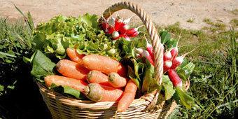 Agriculture biologique : le cadre légal se met en place | Bio alimentation | Scoop.it