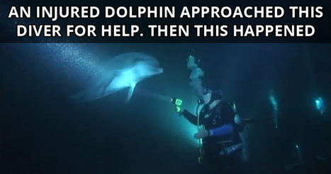 An Injured Dolphin Approached this Diver for Help. Then This Happened | Xposed | Scoop.it