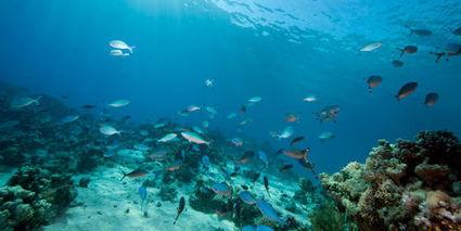 Quand les océans se réchauffent, les poissons rétrécissent - Terrafemina | Génération en action | Scoop.it