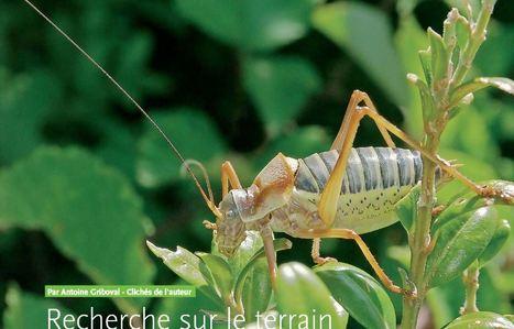 Recherche sur le terrain et identification sonore des Orthoptères | EntomoScience | Scoop.it