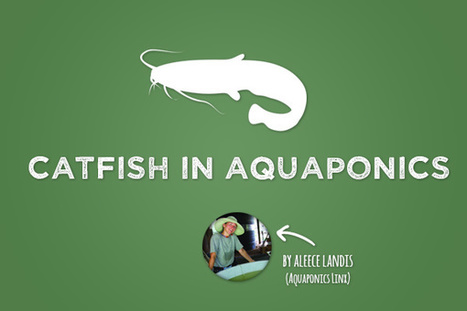 Catfish in Aquaponics - Bright Agrotech | Aquaponics~Aquaculture~Fish~Food | Scoop.it