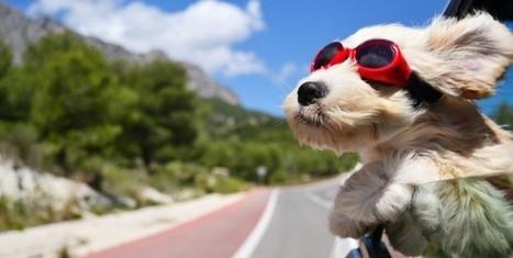 Vous êtes optimiste ? Ca tombe bien, votre chien aussi ! - Allo-Médecins   CaniCatNews-actualité   Scoop.it