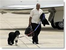 Obama Furloughs FDA Inspectors; Keeps $100K First Family Dog Walker :: Minute Men News | News You Can Use - NO PINKSLIME | Scoop.it