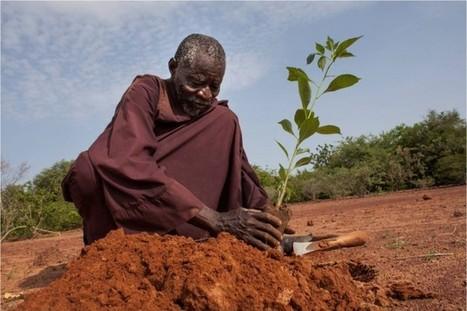 Yacouba Sawadogo, l'homme qui a arrêté le désert,«Les gens pensaient que j'étais fou». - | Agriculture et planète | Scoop.it