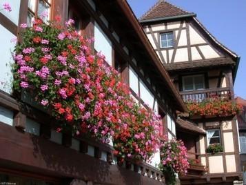 Villes et villages fleuris d'Alsace - Palmarès 2013   Tourisme Grand Ried Alsace   Scoop.it