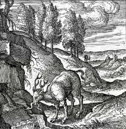 A Cova da Bruxa | Arqueología, Historia Antigua y Medieval - Archeology, Ancient and Medieval History byTerrae Antiqvae (Grupos) | Scoop.it