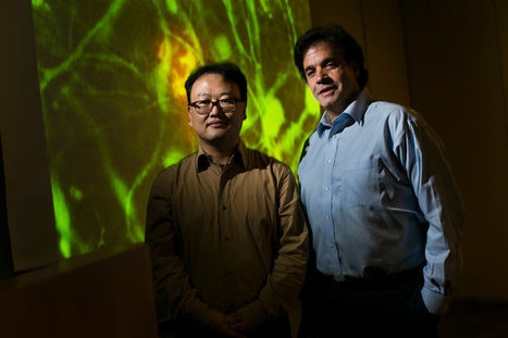 Breakthrough Replicates Human Brain Cells for Use in Alzheimer's Research   CareSwap_ALZHEIMER'S   Scoop.it