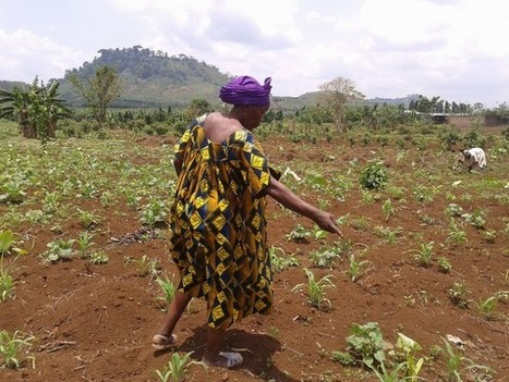 Small Farmers' Loss of Land Increases World Hunger | Inter Press Service | Confidences Canopéennes | Scoop.it