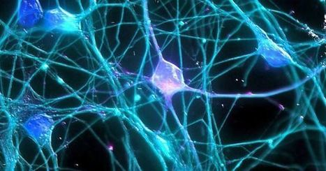 Scientists May Have Reactivated The Gene That Causes Neurons To Stop Growing | IELTS, ESP, EAP and CALL | Scoop.it