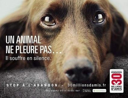 Contre l'abandon des animaux | T6 - Environnement, style de vie, animaux | Scoop.it