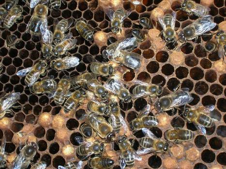 Apiculture : Modification des assolements et météo mettent à mal la production de miel | Filière apicole française | Scoop.it