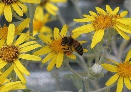 Les pesticides ont des effets néfastes pas seulement sur les abeilles   Toxique, soyons vigilant !   Scoop.it