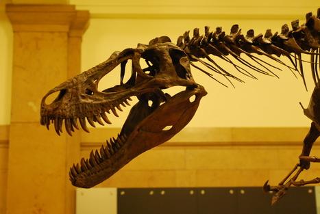 Auction Block Dinosaur Stirs Controversy at SVP | Paleontology News | Scoop.it